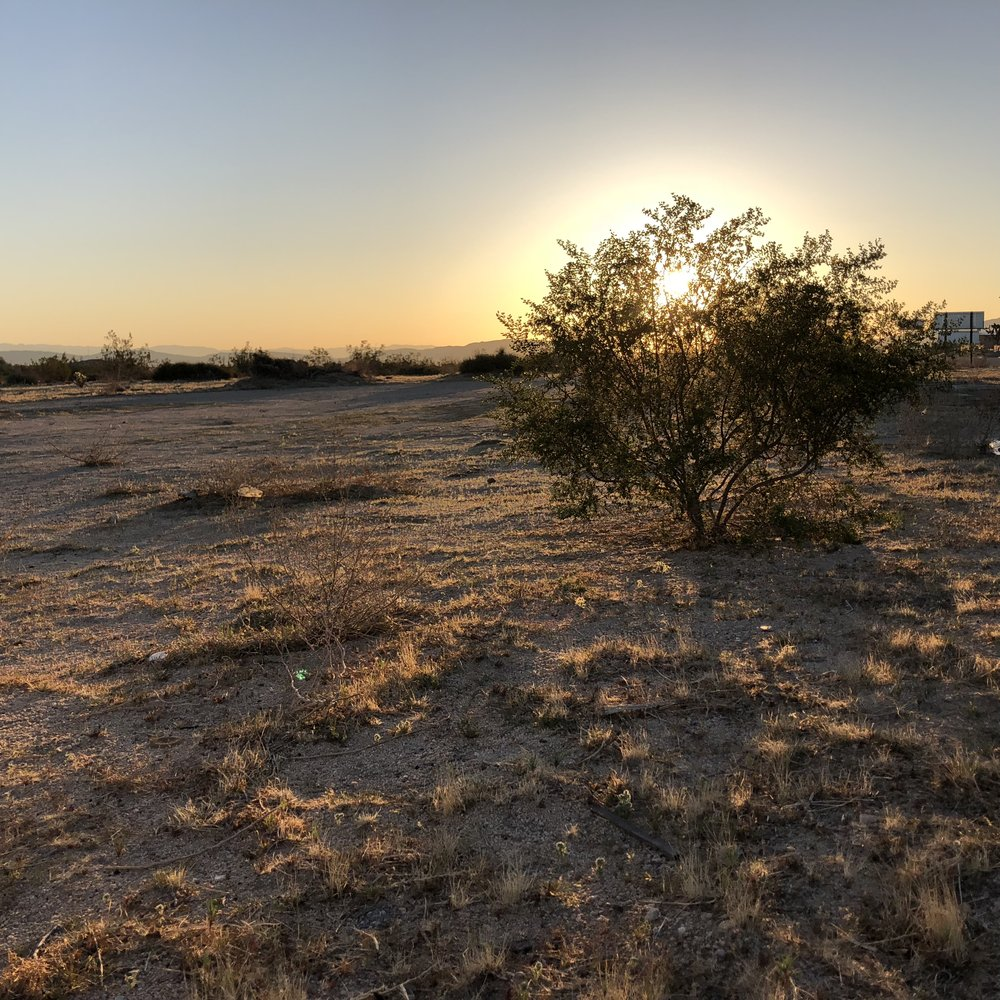 Joshua Tree Sunrise.jpg