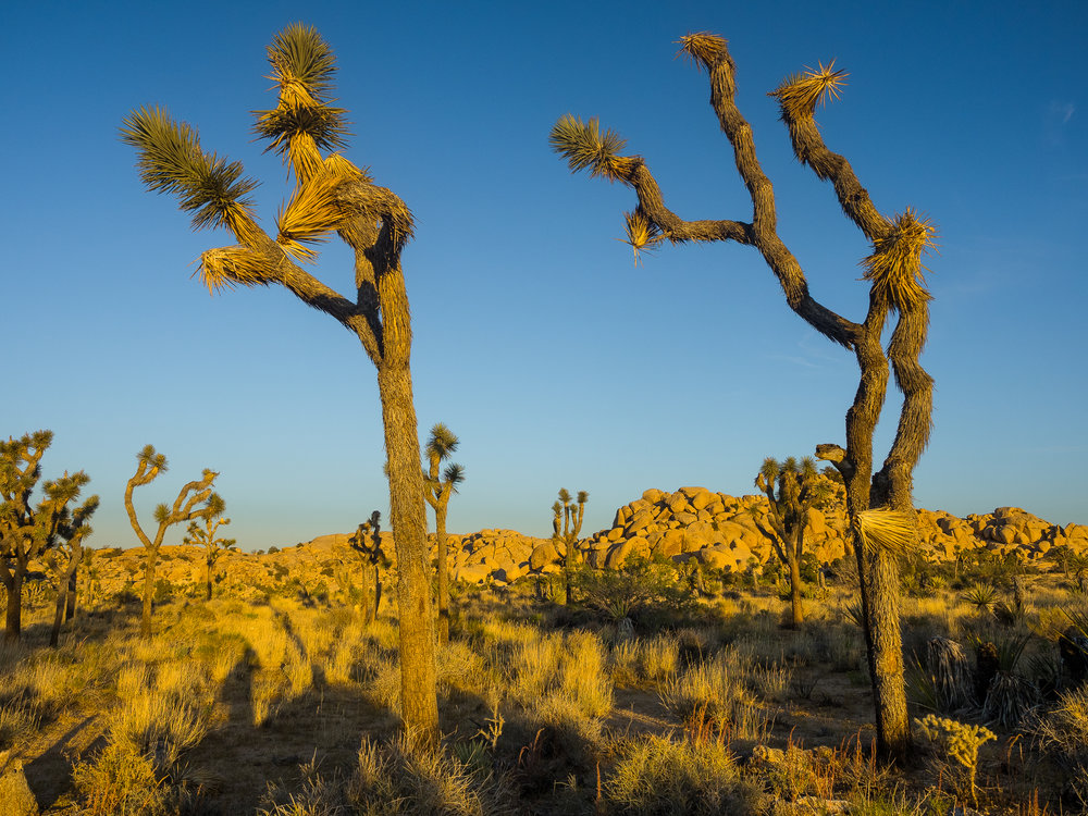 Joshua Tree National Park-99.jpg