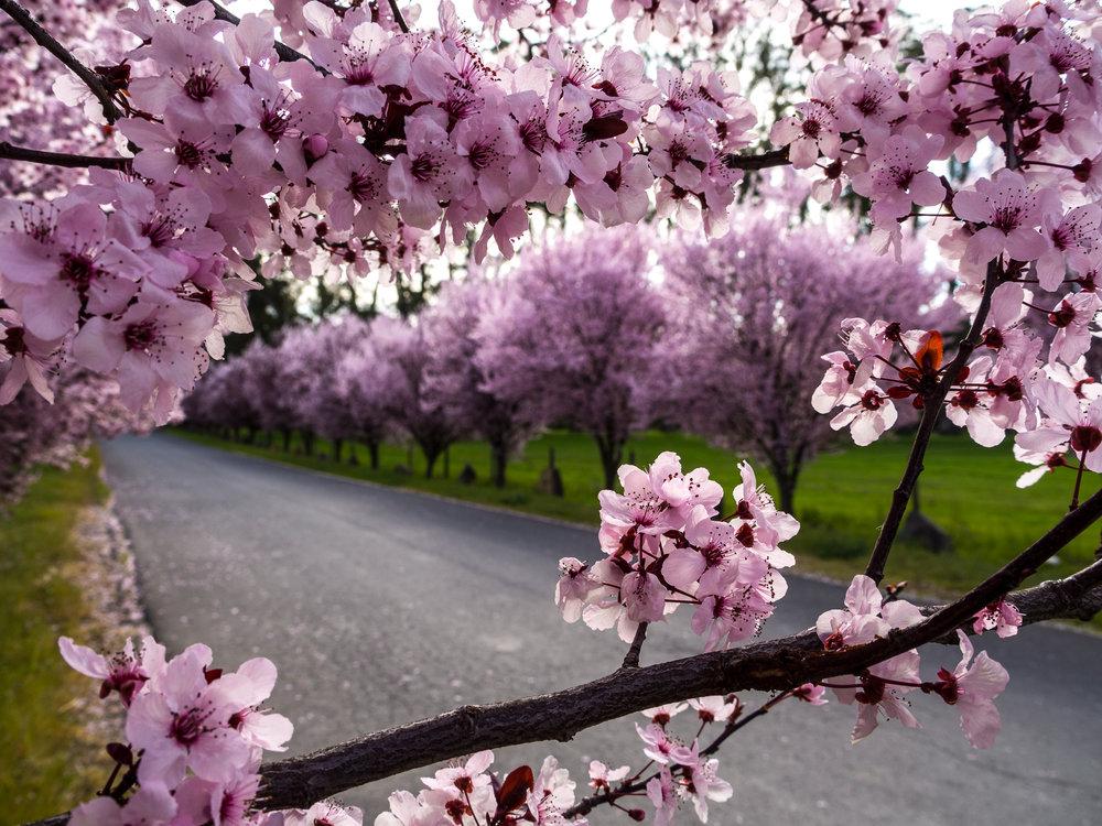 Sonoma_Spring_Morning-10.jpg