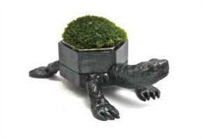 Moss-Turtle  Incense container.jpg