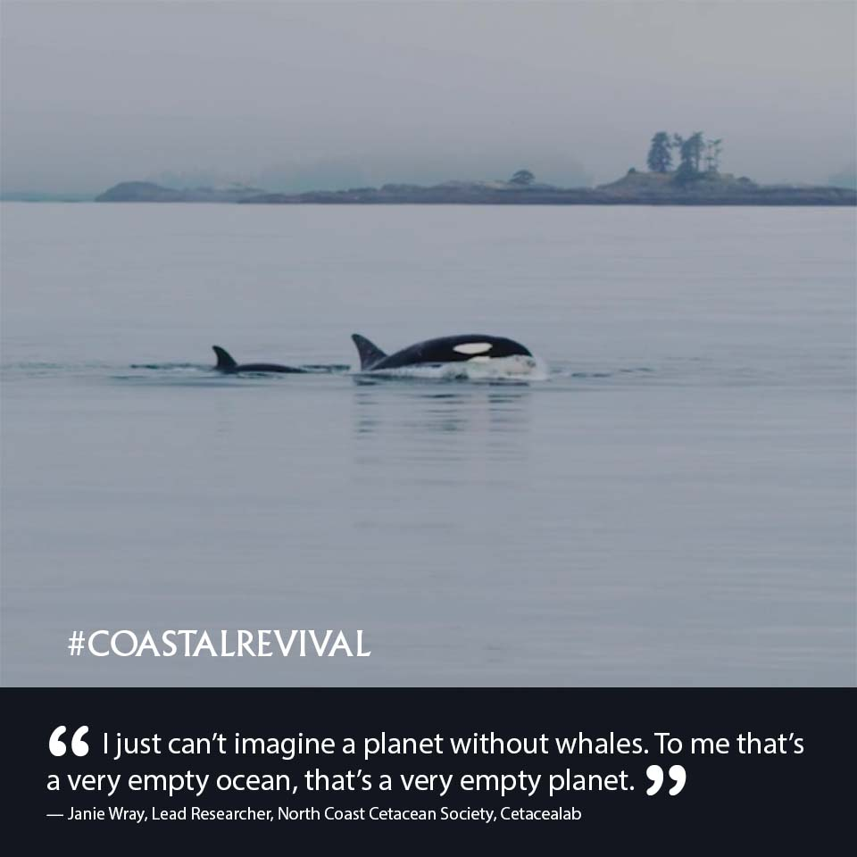 CR E4 05 Humpback Whales 7_17.jpg