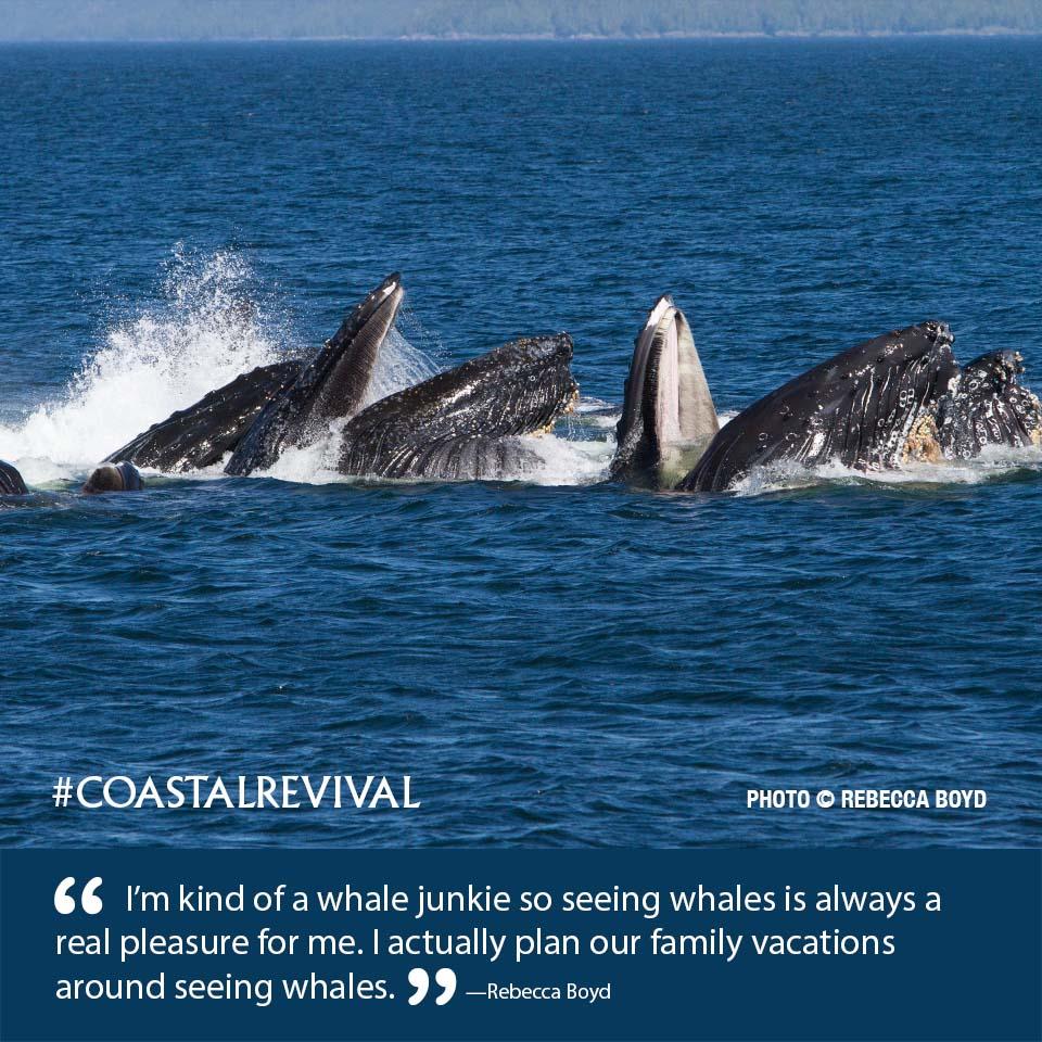 CR E4 04 Humpback Whale 6_55.jpg