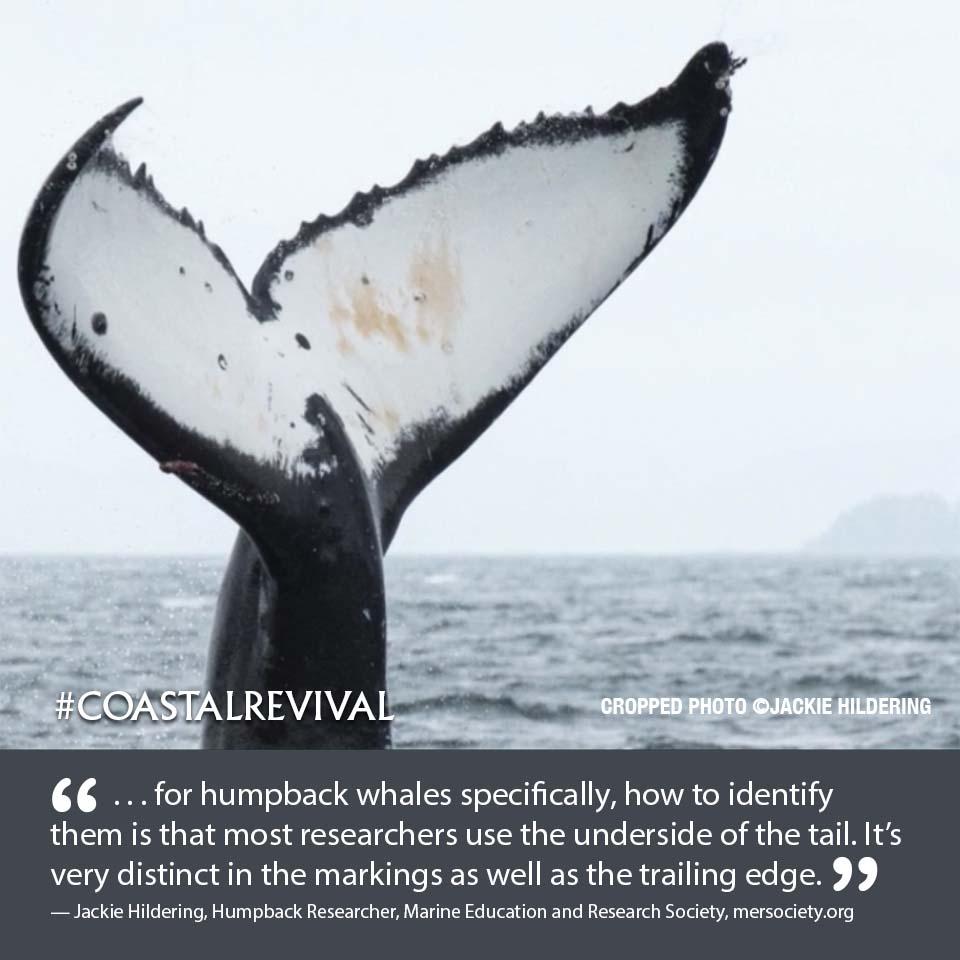 CR E5 02 Whale (P) 2_53.jpg