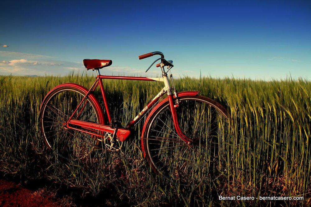 spring-bicycle.jpg