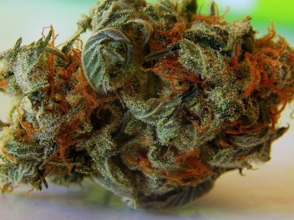 weed-759987.jpg