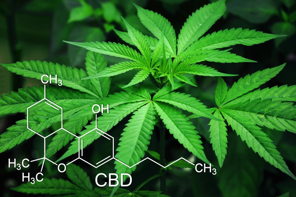 marijuana-3678222.jpg