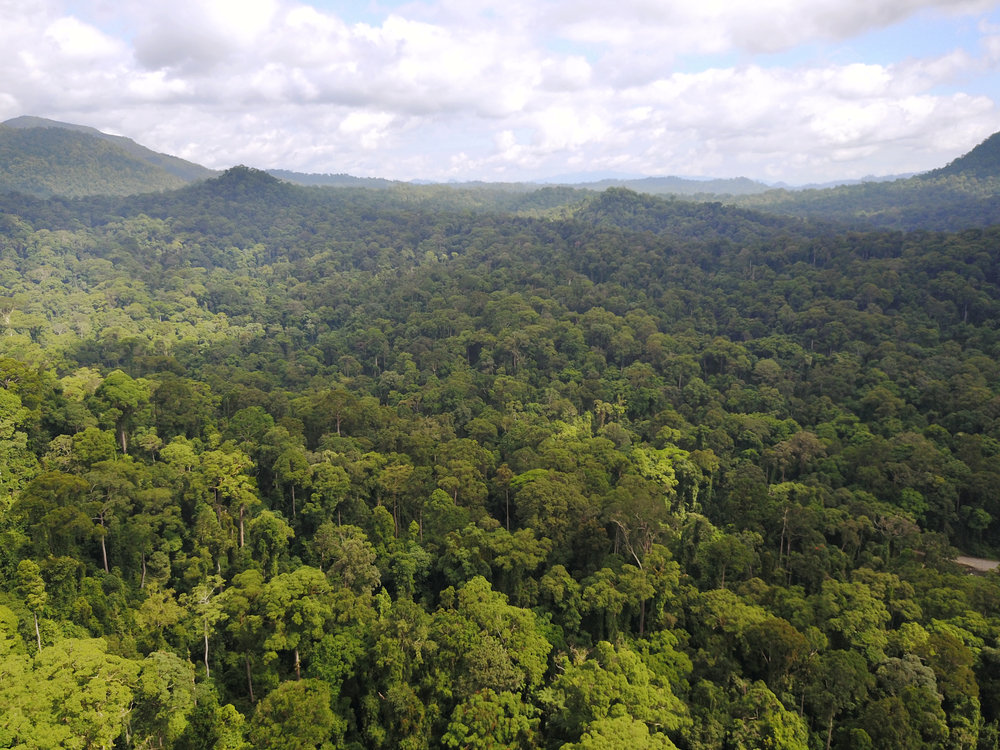 Readercoin Saved 1200 Acres of Rainforest in June! -