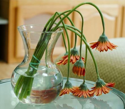 wilted-flower-1.jpg