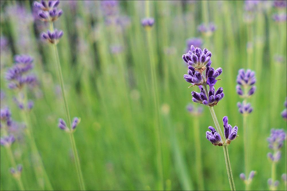 aroma-therapy.jpg