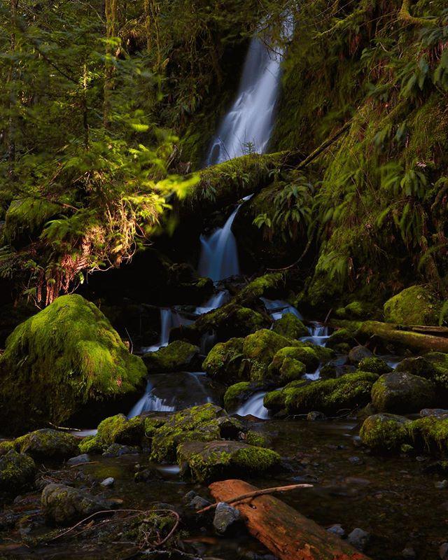 Sunday exploring in the Quinault rain forest . . . . #pnwphotographer #pnwlife #exploretocreate #pnwonderland #pnw #washingtonstate #washingtonexplored #pacificnorthwest #optoutside🌲 #upperleftusa #waterfall #waterfallsofinstagram #pnwcollective