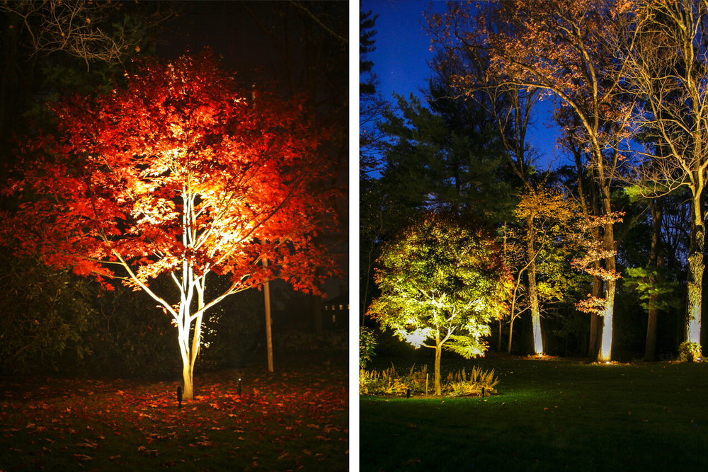 Uplighting on trees