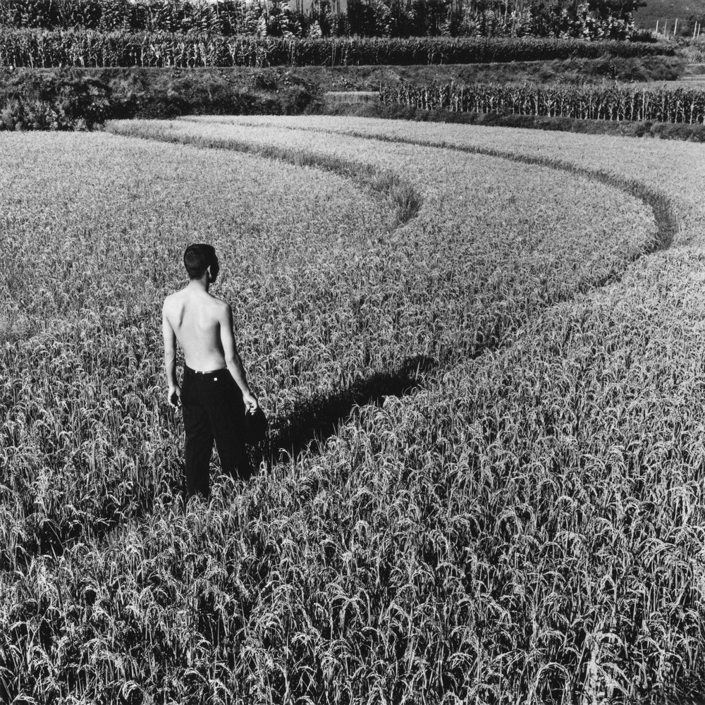 MonicaDenevan_RiceHarvest,China2007.jpg