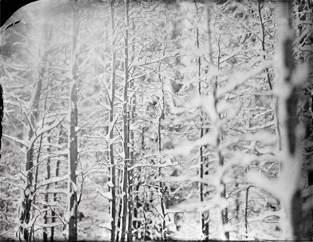 """Winter Aspen"" - 27''x35'' Ambrotype - 2015"