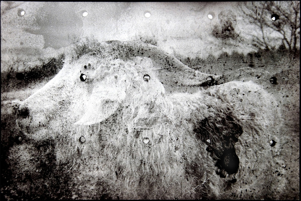 """Bullets, LamWood Ranch"" by Shelley Wood"