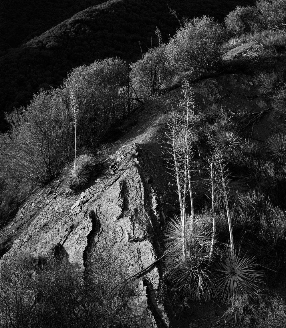 """""""Yucca's"""" byChris Kleine"""