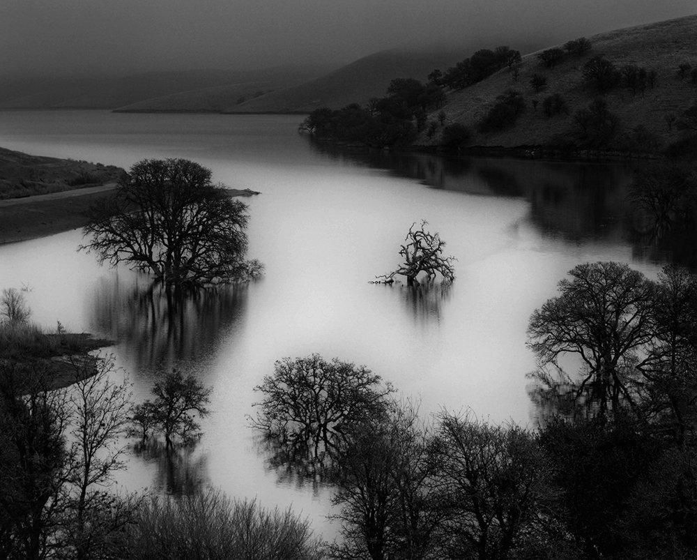 """Stranded Oaks"" by Chris Kleine"