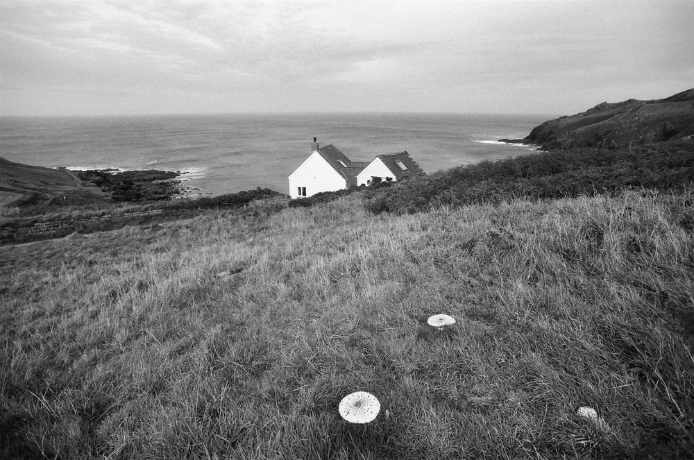 "Mushrooms at Cape Cornwall, England"" by Joanna Tillman"
