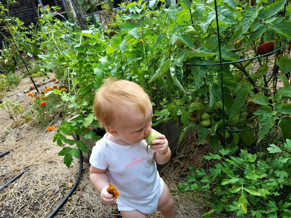 One of my greatest pleasures is watching my children explore our back yard garden. No room for toxins here!