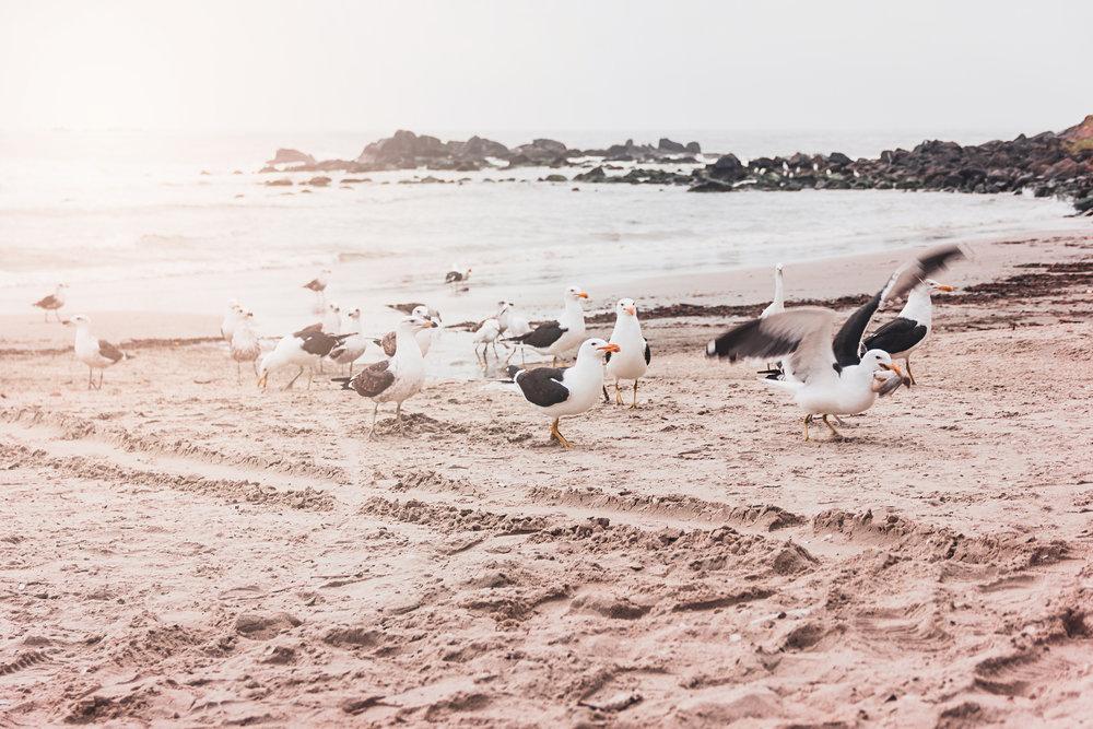 Seagulls_beach.jpg