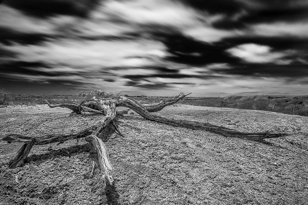 Salt Cedars.jpg