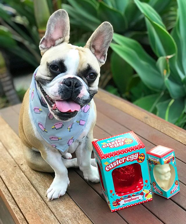 Happy Orthodox Easter 🐣 Our treats are still available at @petbarn if you missed out! 🐾