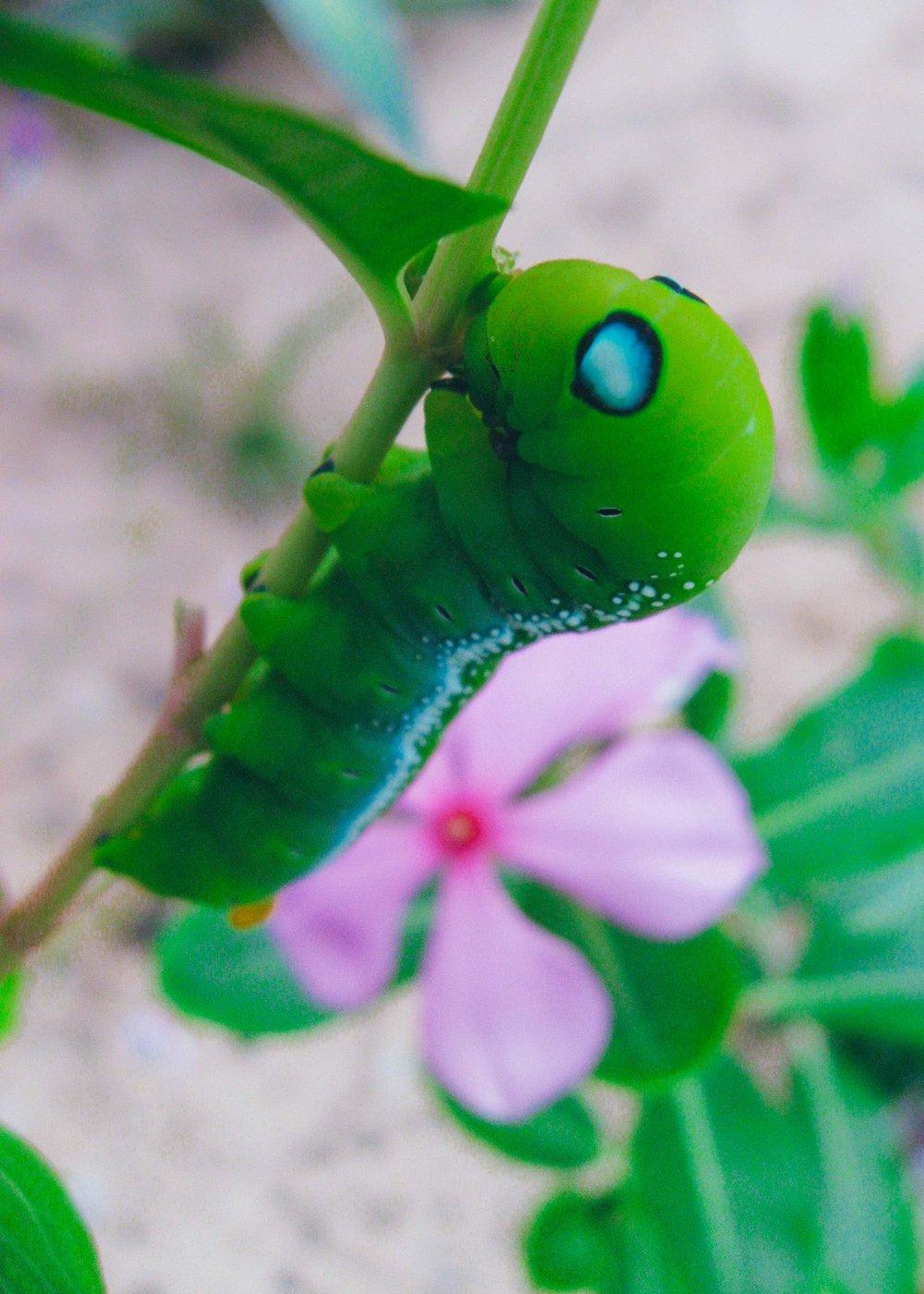 caterpillar_2417901919_o.jpg