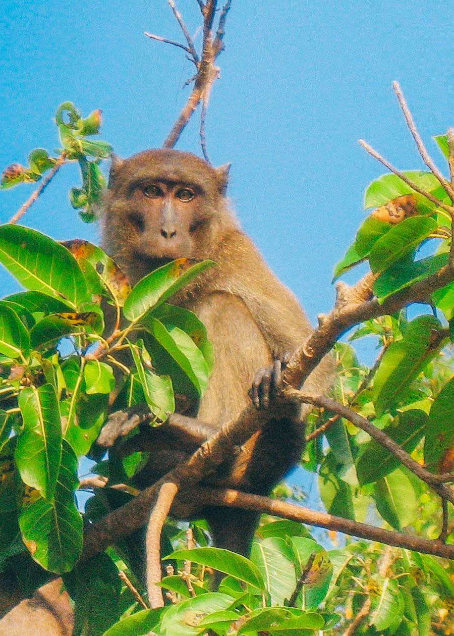 monkey_phra_2400780198_o.jpg
