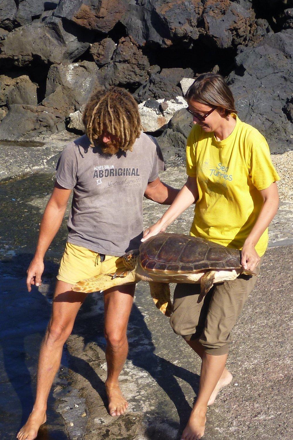 Italiassa. Selviääkö juuri tämä valekarettikilpikonna sukukypsyyteen asti ja palaa rannalle pesimään?