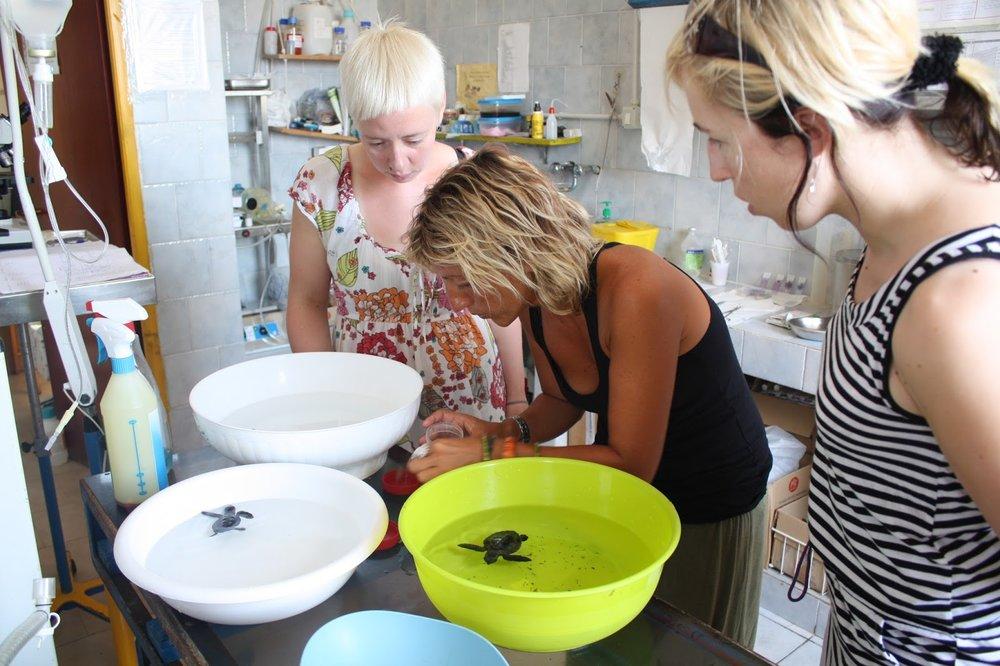 Alessandra opastaa suomalaisia vapaaehtoisia Hannaa ja Annea poikasten ruokinnassa