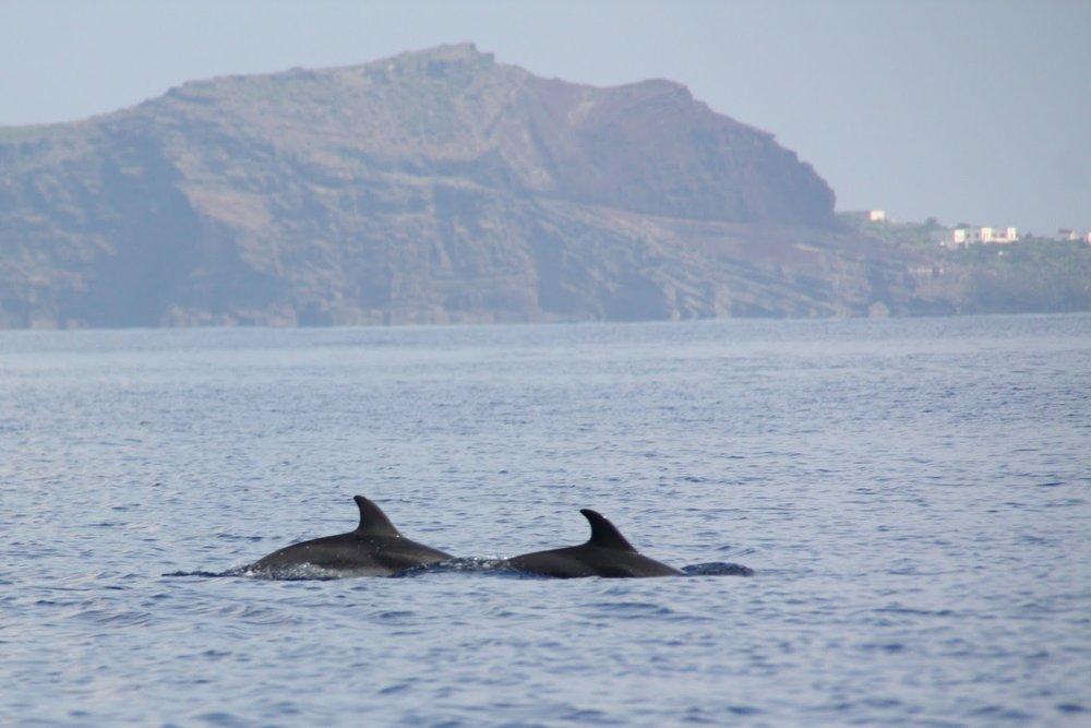 Delfiinien seurantaa Linosan ympäristössä
