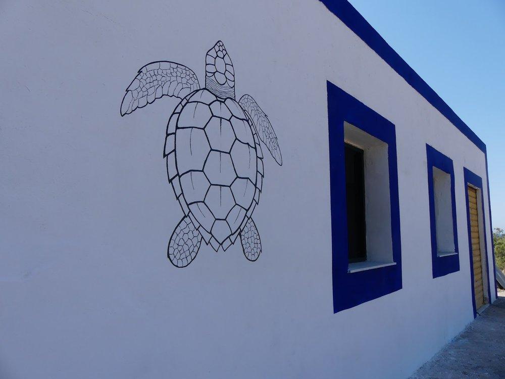 Kilpikonnakeskus