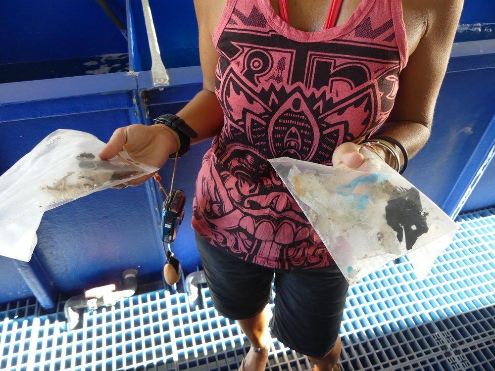 Kolmesta pelastetusta kilpikonnasta löytyneet muovit