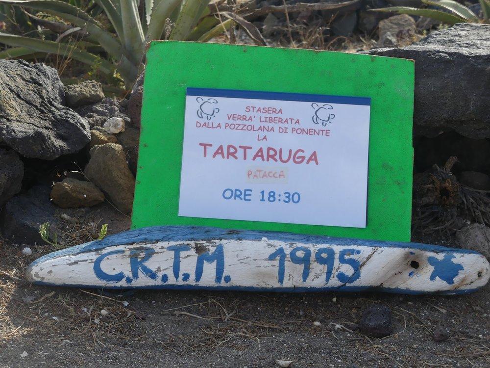 Ilmoitus muille, että kilpikonnan vapauttamista saa tulla katsomaan klo 18:30