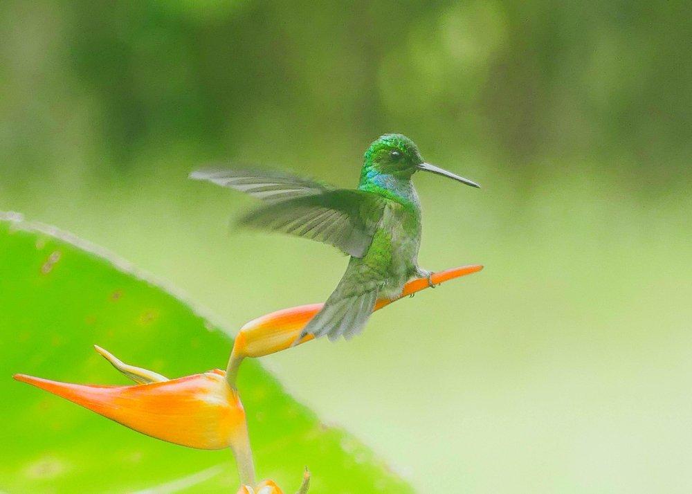 Costa Rica on ekomatkailijan paratiisi.