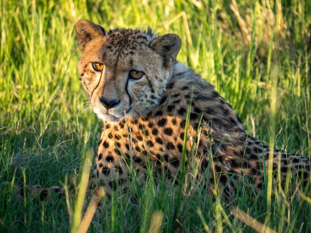 Etelä-Afrikassa koet uskomattomia elämyksiä seuraten isojen villieläinten elämää