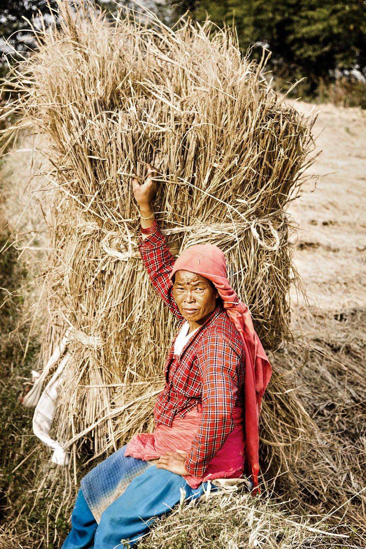haywoman.jpg