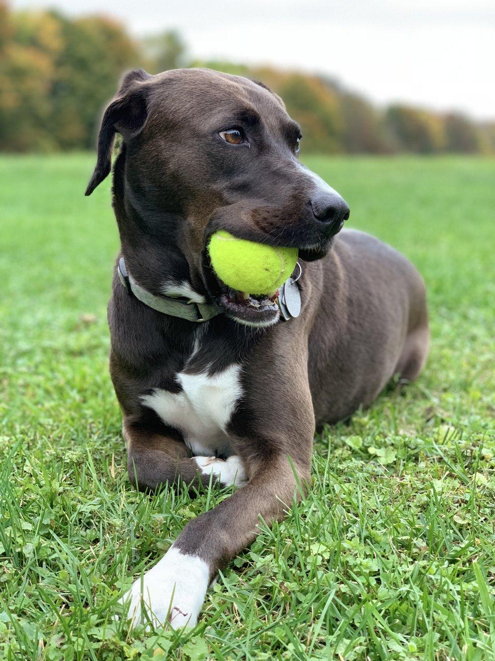 Ellie- Turning Stone Farm family member