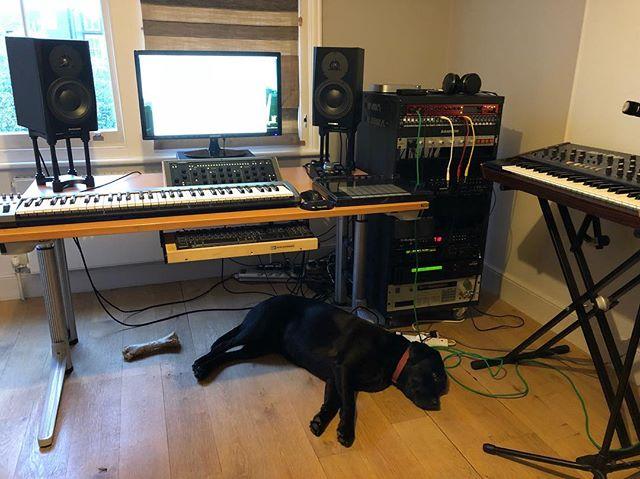 #studiodog