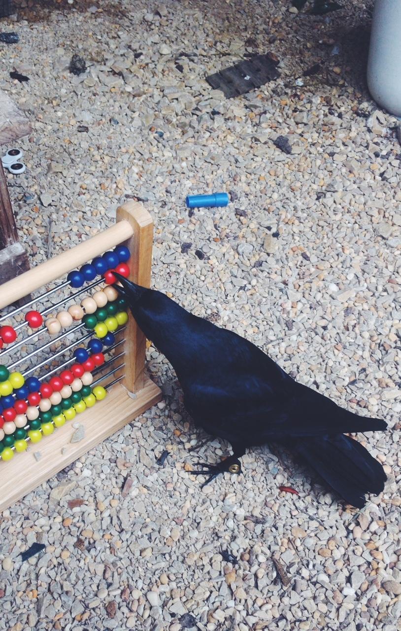 russ abacus.jpg