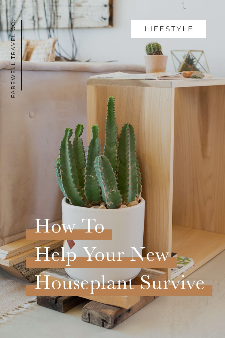 How the Help Your New Houseplant Survive
