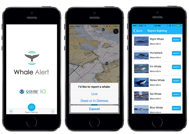 Whale Alert App Screens.jpg
