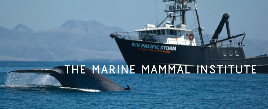 Ari Friedlaender | Oregon State University Marine Mammal Institute