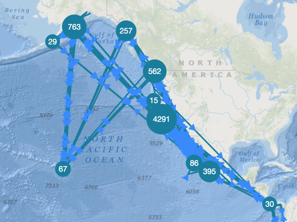 2015 North Pacific Humpback Migratory Connections