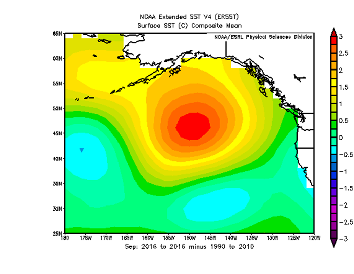 """NOAA image showing unusually warm water temperatures in the Pacific """"Blob"""" in September 2016"""