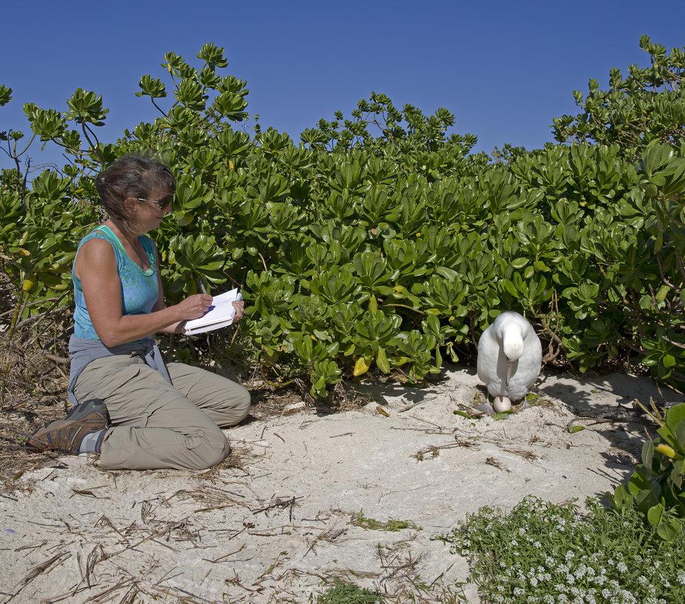 Caren on Midway sketching albatross - photo by Dan Clark