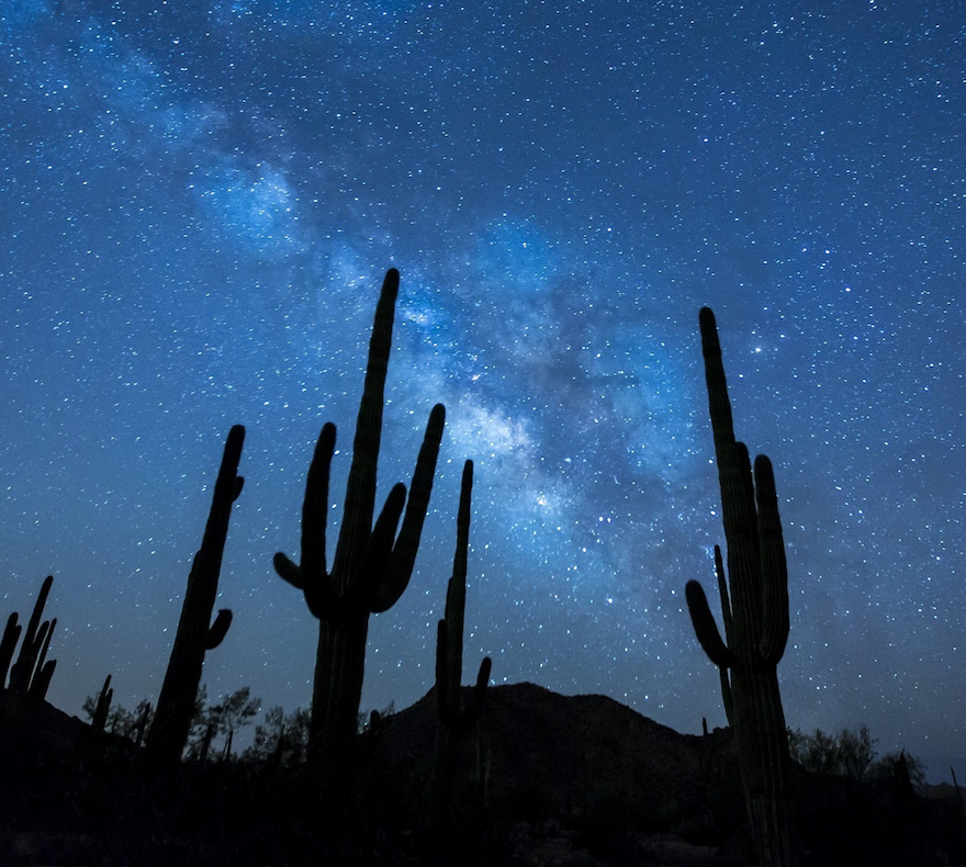 cactus stars POC.png