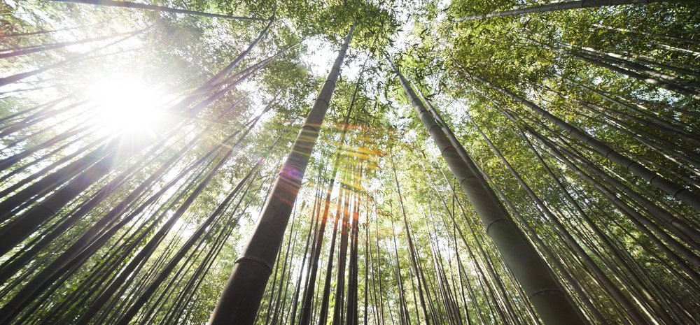 bamboo-forest-welcome page.jpeg