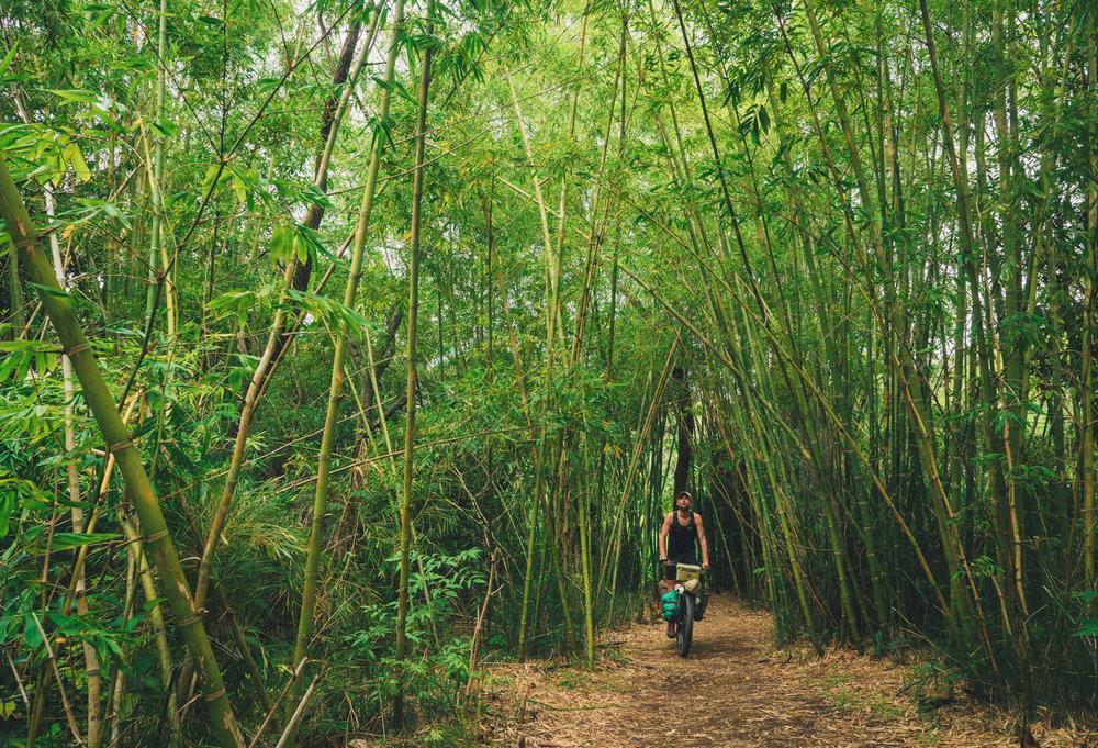 A bamboo trail in Vilcabamba (Ecuador)