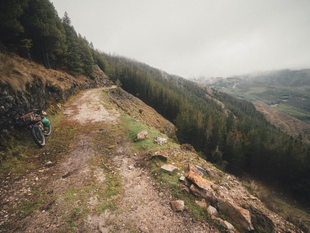 Pine forests above 4000m.