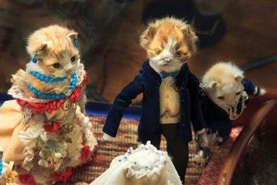 kittenweddings5.jpg